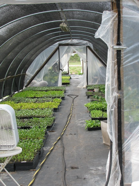 1farmgreenhouse